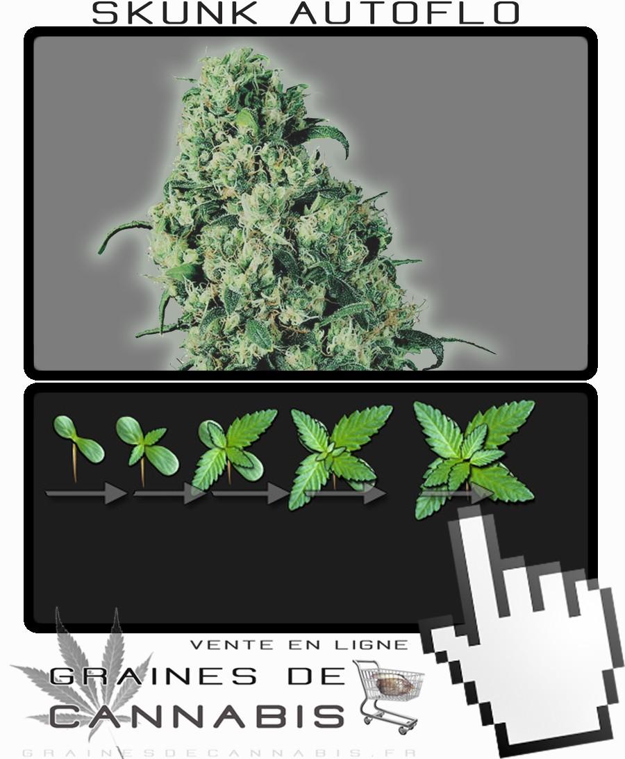 comment planter zamal