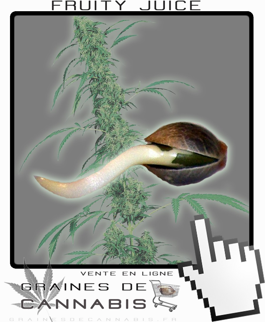 Graines de cannabis pour la culture en int rieur for Conseil culture cannabis interieur