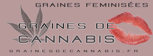 Graines de cannabis féminisées