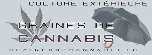 Graines de cannabis pour la culture extérieure
