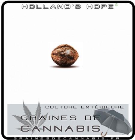 Les meilleures graines de cannabis pour l ext rieur for Terreau cannabis exterieur