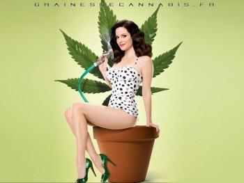 arrière plan de cannabis