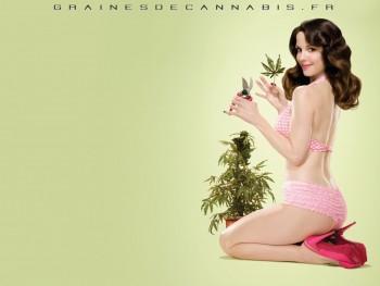 Fonds d'écran Cannabis gratuits