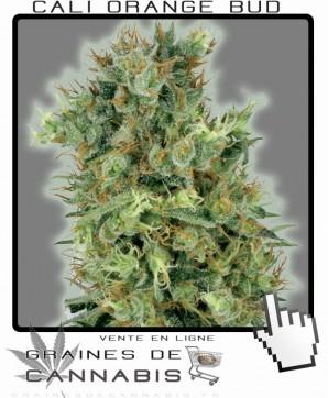 California orange bud Cannabis