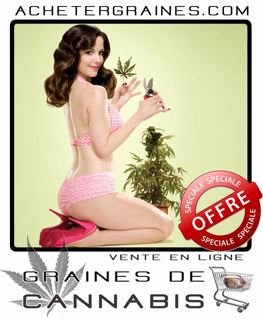 Petite plante de cannabis