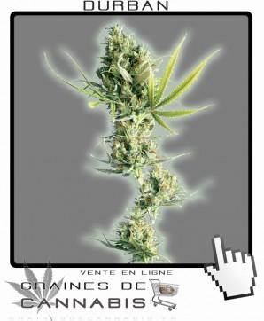 Graines de Durban Cannabis