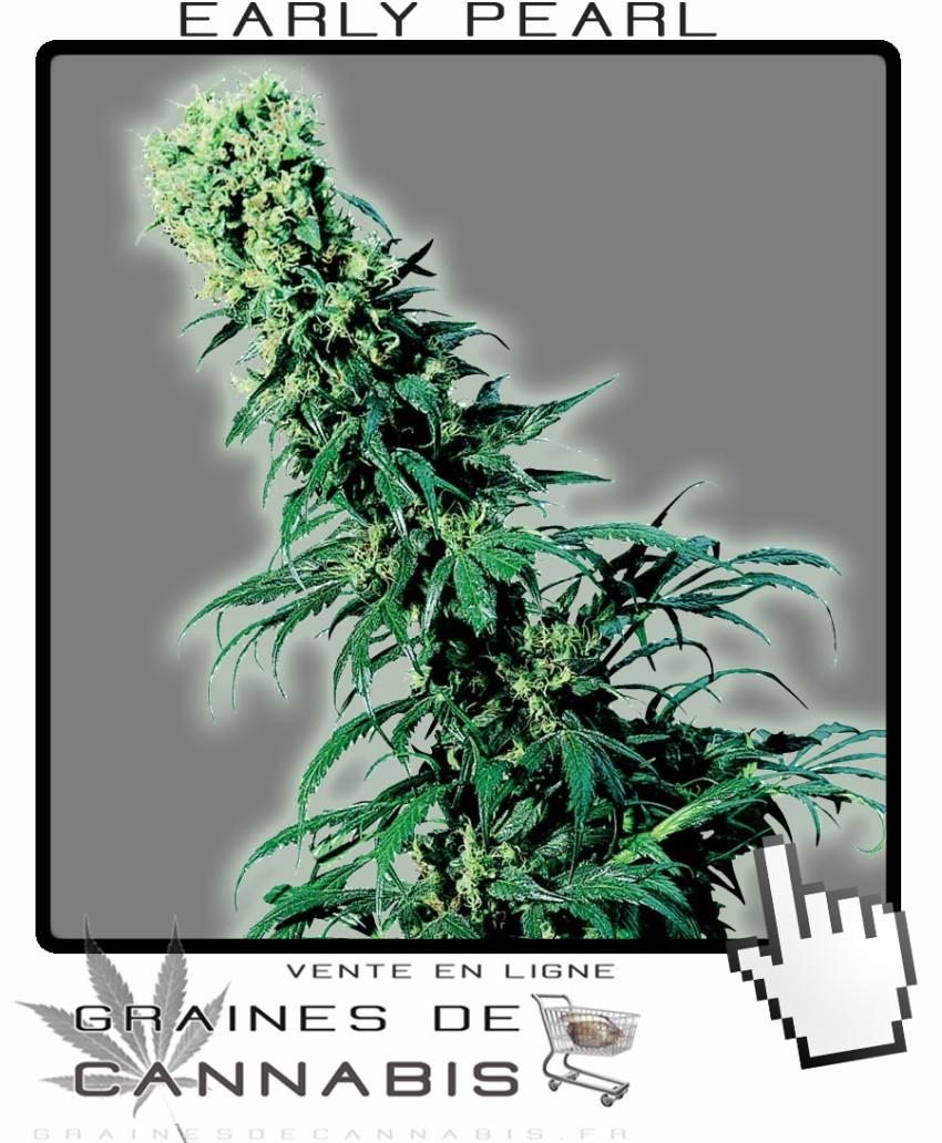 Les meilleures graines de cannabis pour la france du nord for Graine de weed exterieur