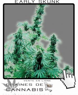 Cannabis pour les débutants