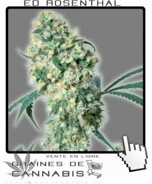 Cannabis commercial, Ed Rosental Cannabis