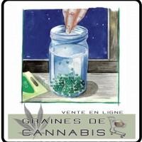 Un germoir pour germer les graines de cannabis