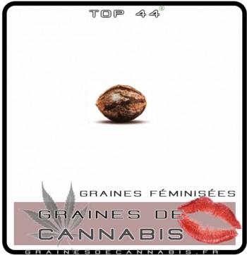 graine de cannabis facile a farie pousser en intérieur