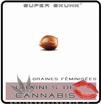 Acheter des graines feminisées pour l'extérieur