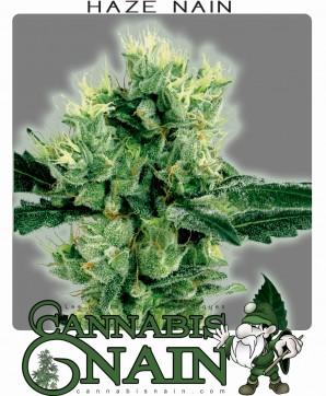 graines de cannabis nain