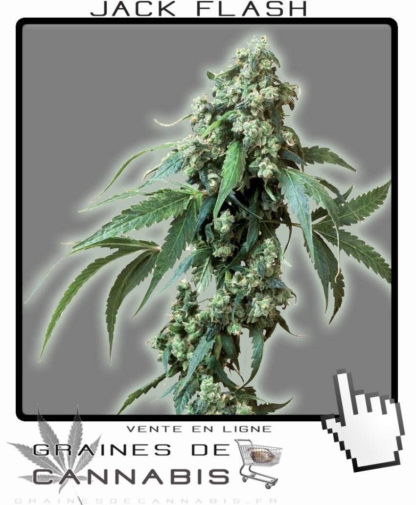 Meilleur graine autofloraison exterieur 28 images for Meilleur engrais pour cannabis exterieur