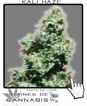 Vente de graines de cannabis Kali Haze