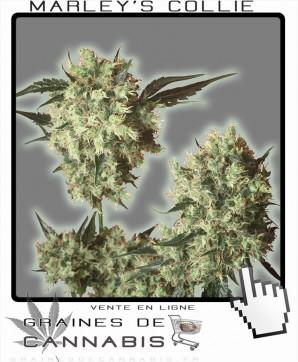 Le Cannabis de Bob Marley