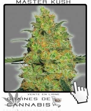 Vente de graines de Master Kush Cannabis