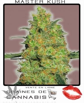 Cannabis femelle