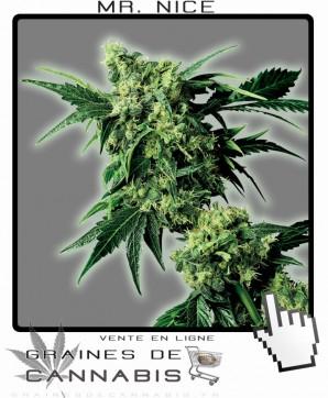 Vente de Graines de Mister Nice Cannabis