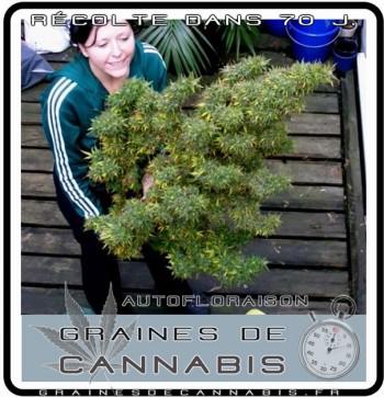 Planter en t est ce trop tard pour semer en juin ou for Cannabis floraison exterieur