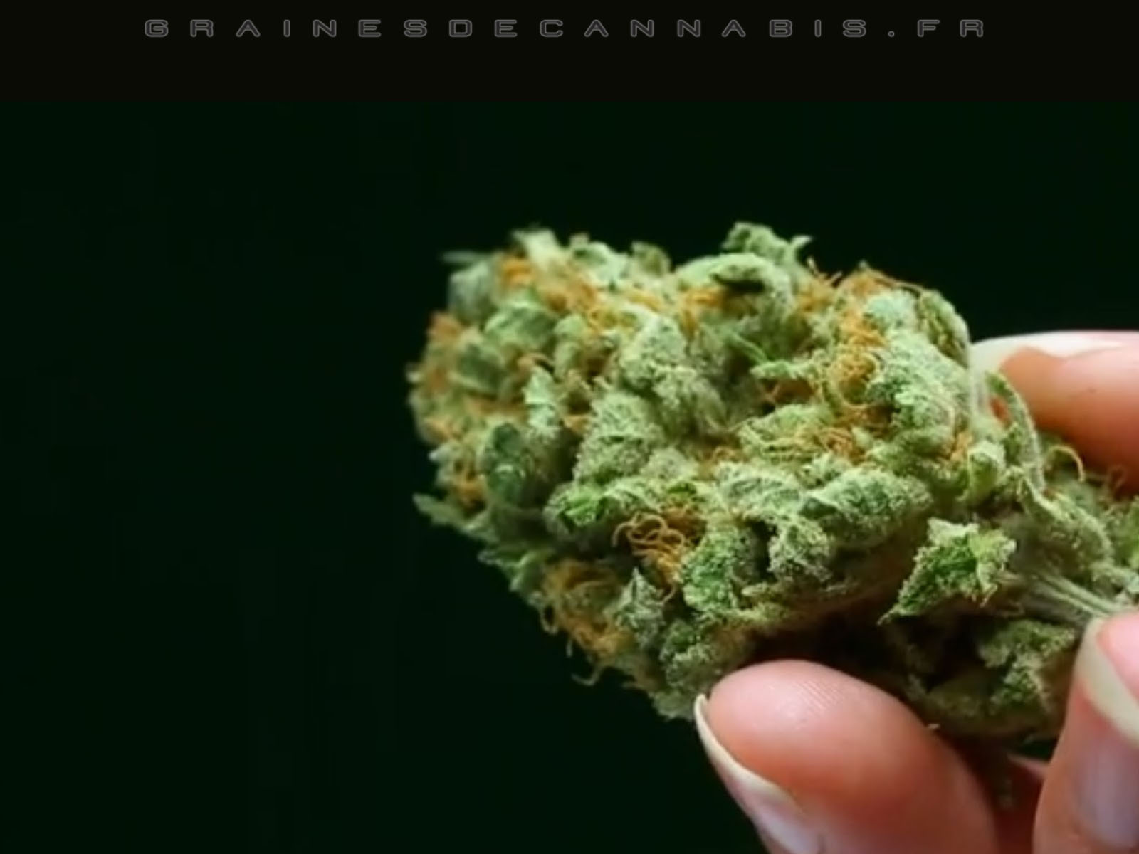 grainesdecannabis.fr/image/plan-d-arriere-beuh.jpg
