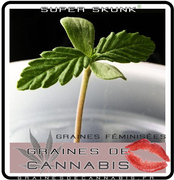 Quel terreau pour cannabis exterieur 28 images la for Culture cannabis exterieur en pot