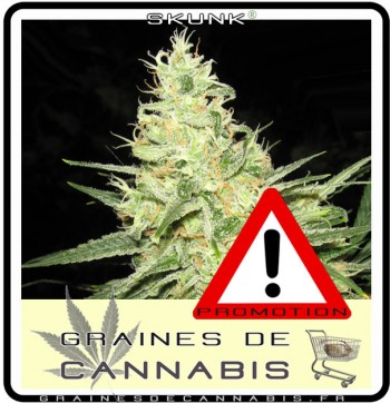promotion-graines-cannabis
