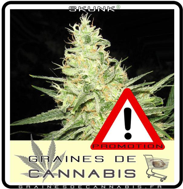 Graine cannabis femelle pas chere for Graine de cannabis femelle interieur
