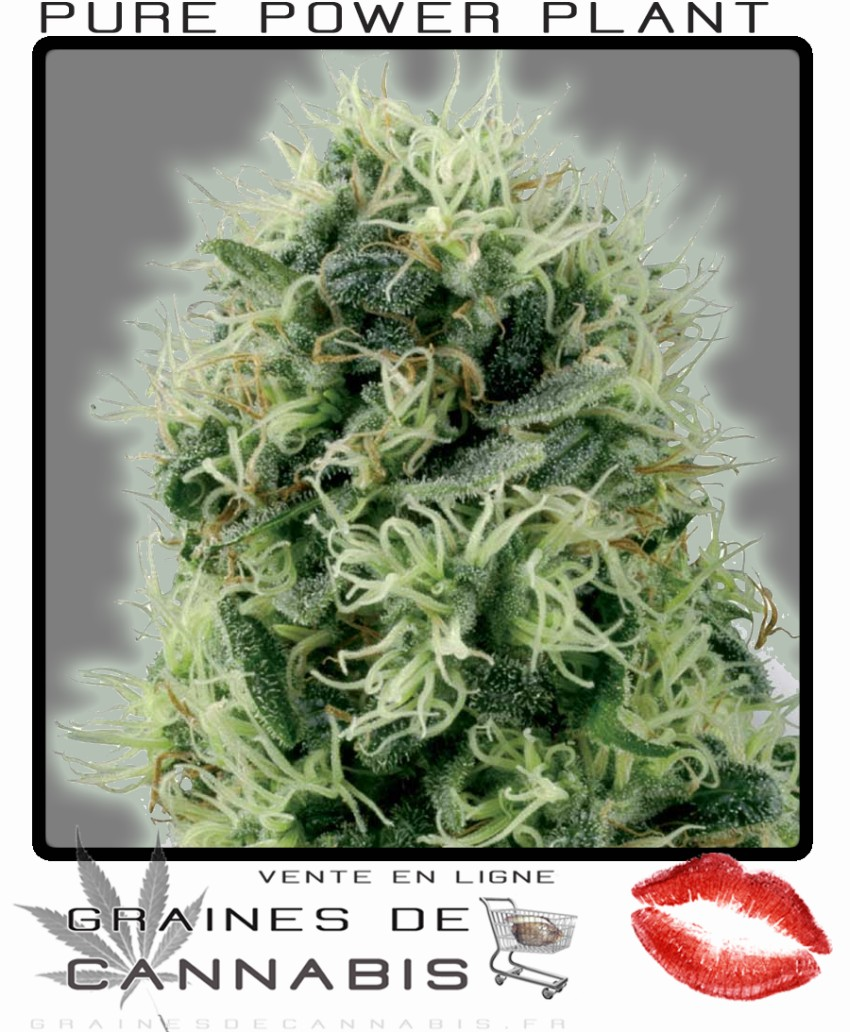 Graine de cannabis interieur 28 images pourquoi for Graine de cannabis interieur