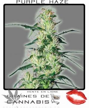 cannabis violette