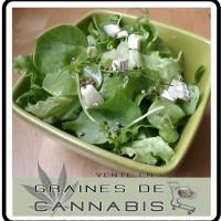recette-graines-cannabis