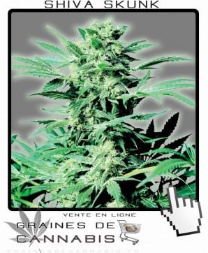 Acheter Graines de Cannabis Indica le plus fort