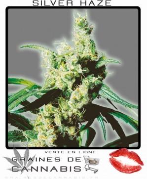 Acheter Graines de Cannabis Sativa le plus fort