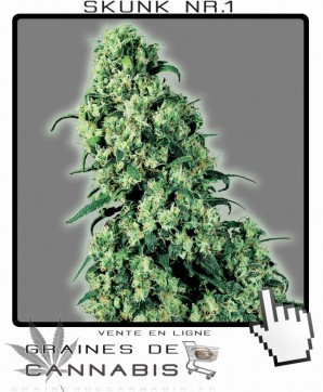 Graines de skunk no.1 cannabis