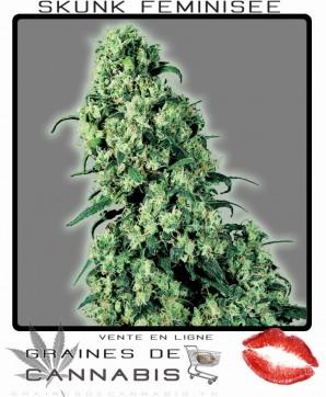 Graines de Cannabis féminisées: Skunk no. 1