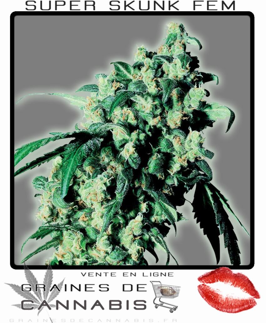 Graines f minis es de super skunk cannabis for Graine de weed exterieur