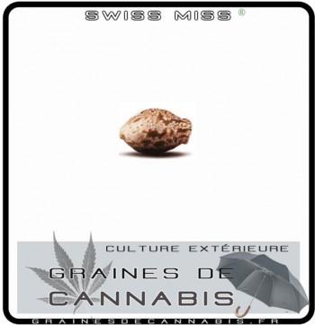 Graines de Swiss Miss Cannabis pour les climats froids