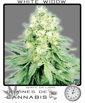 White widow naine