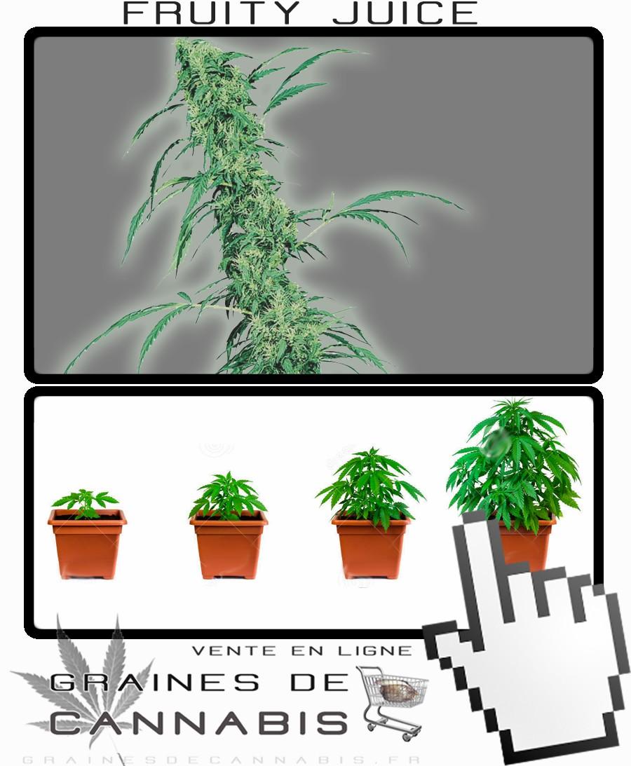 Graines de Cannabis pour la culture en intérieur