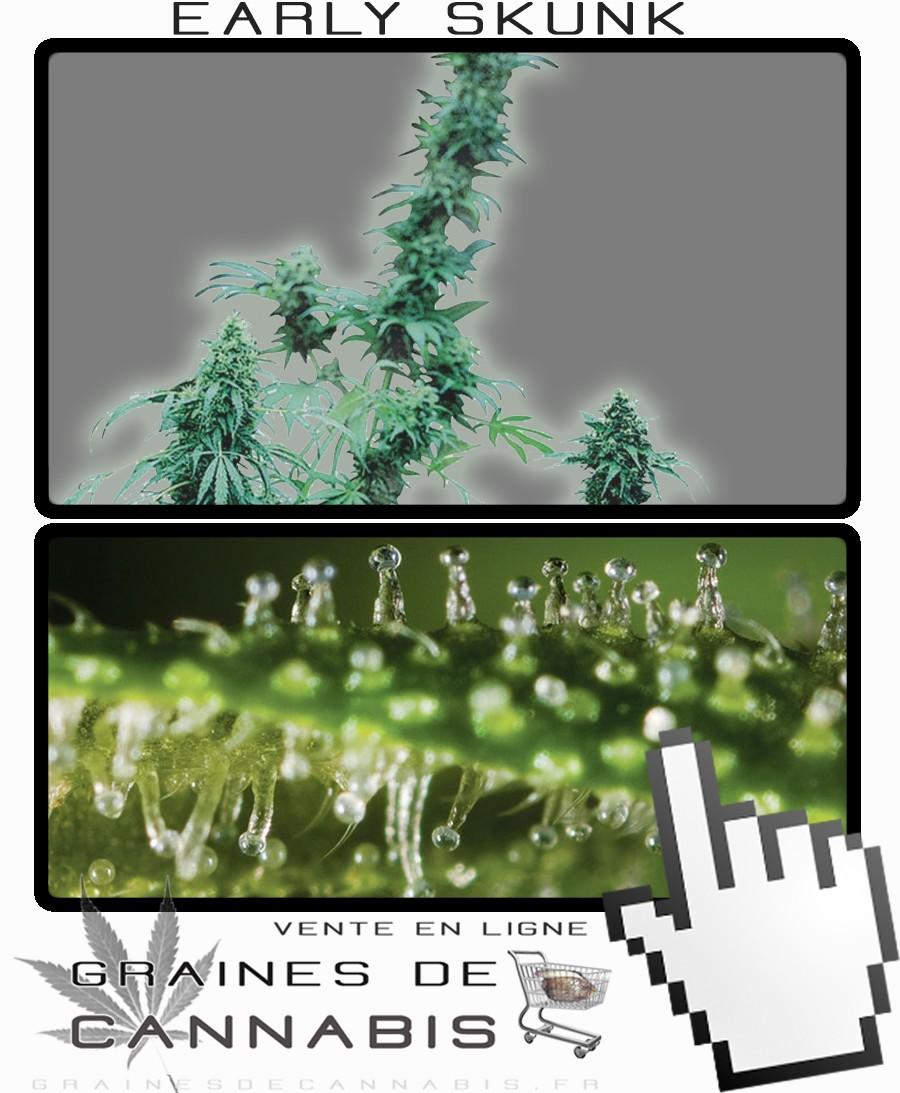 Quand recolter cannabis exterieur 28 images cultiver for Cultiver cannabis exterieur